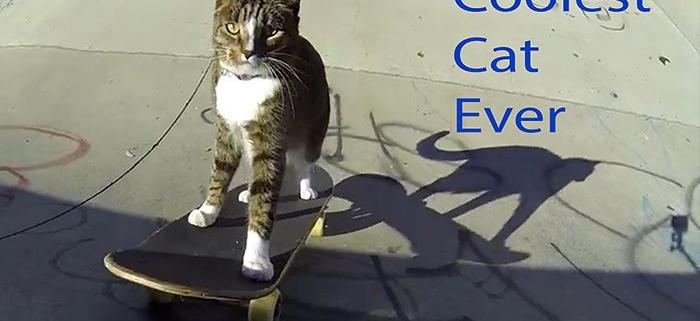 Didga-Coolest-Cat-Ever