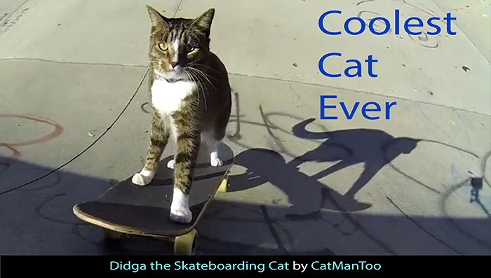 Didga-Coolest-Cat-Ever