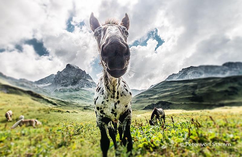 Pferd bei Lech