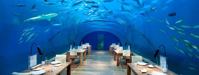 Malediven Reiseinfos Conrad-Maldives-Ithaa-Undersea-Restaurant