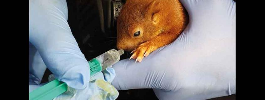 Eichhörnchen Squirrel Pippilotta
