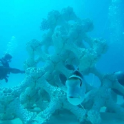 Maldives: artificial 3D printed coral reef