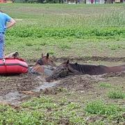 horse rescue Pferderettung