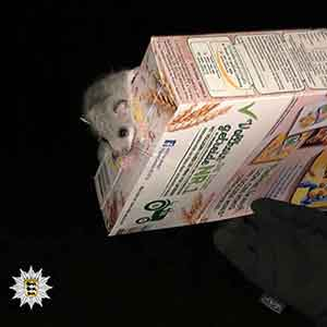 siebenschlaefer dormouse triggered a police operation