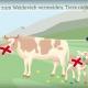 Kuhattacken in Österreich - Regeln für Wanderer und Urlauber