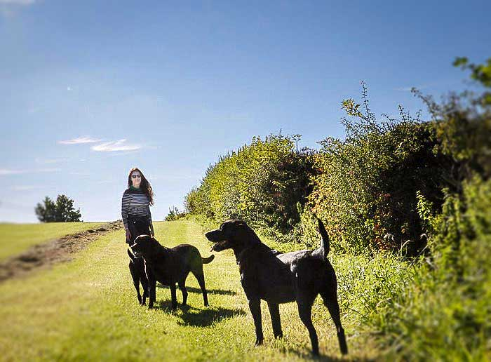 Eggington House dogs