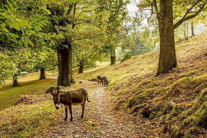 Wald in Malcantona in der Schweiz