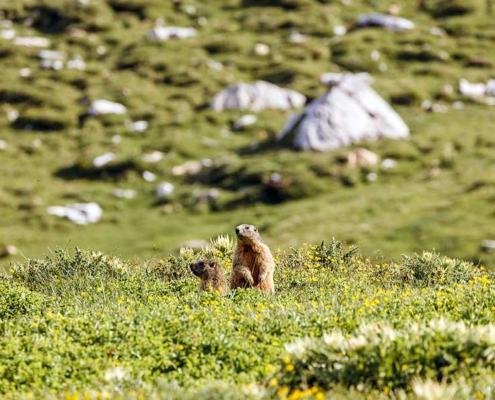 Schöne Täler in Graubünden